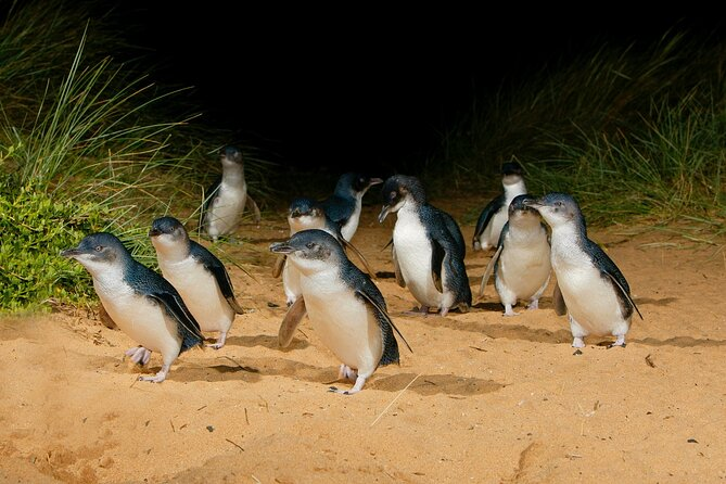 2 Day Exclusively Private Tour Of Phillip Island & The Penguin Parade