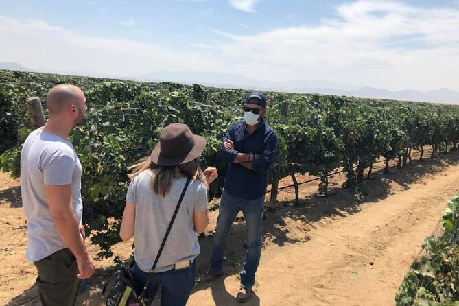 Ojos Negros Valley Wine and Cheese Route Tour in Baja California