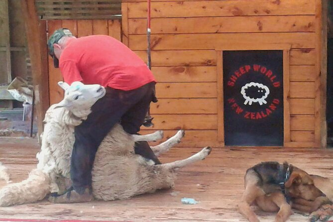 1 Great Day from Auckland - Sheep Shearing LIVE, Manuka Honey - Private Tour