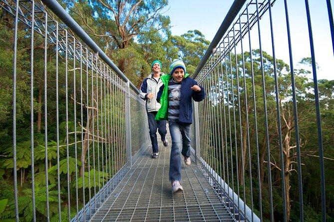 Illawarra Fly Treetop Adventures Treetop Walk Admission Ticket