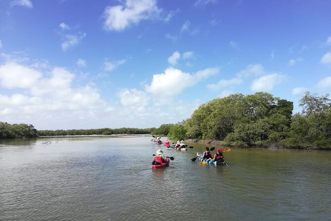 Kayak ecotourism through the holbox mangroves