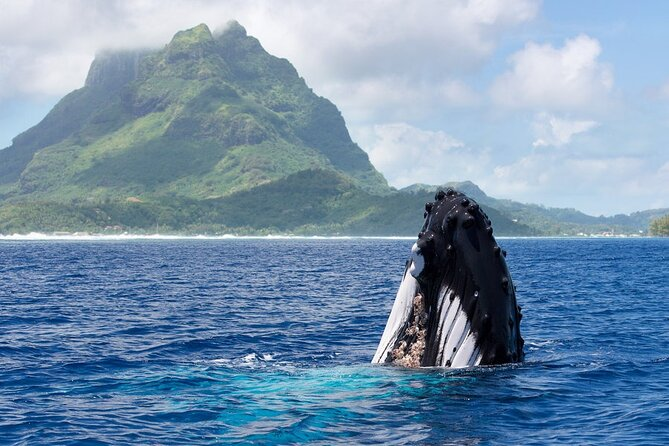 Private Tour: Bora Bora Whale Watching & Swimming Experience