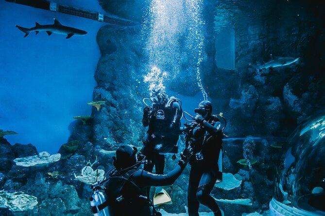Cairns Aquarium Dive with the Sharks