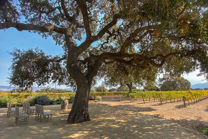 Santa Ynez Wine Country Shuttle