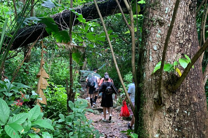 Rainforest and Luquillo Beach Tour in Puerto Rico