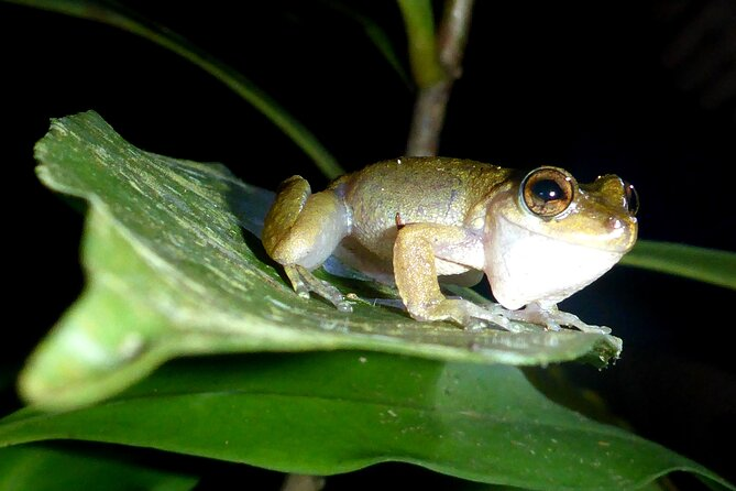 Guided Night Walk in Cape Tribulation