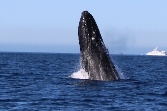 Whale Watching Tours!