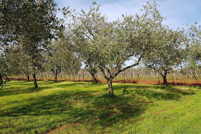Porec and Olive Oil Farm Half-Day Private Tour