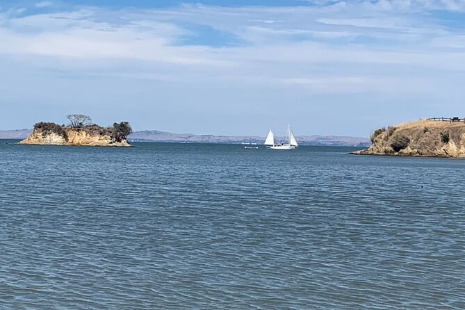 Private Muir Woods, Sausalito, and Tiburon Tour from San Francisco