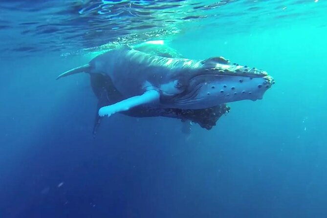 Whale watch, snorkel or fish on a private pedal kayak tour in Maui