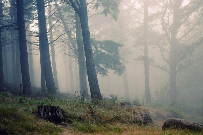 Forêt de lauriers (Laurisilva)