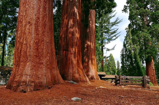 Parque Nacional da Sequoia