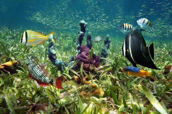 Florida Keys National Marine Sanctuary