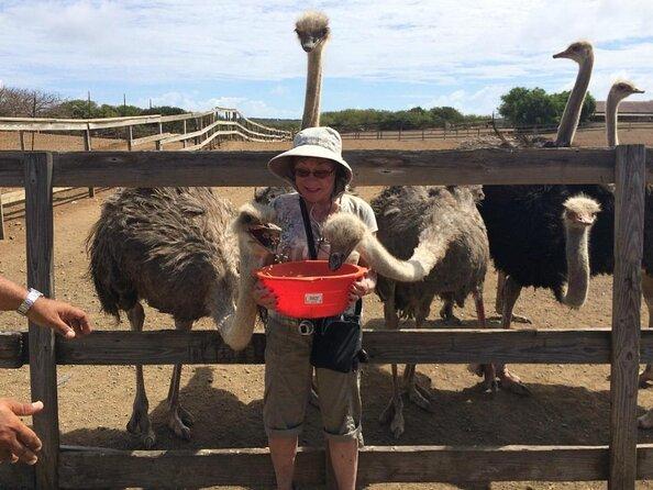 Fazenda de avestruzes de Curaçao