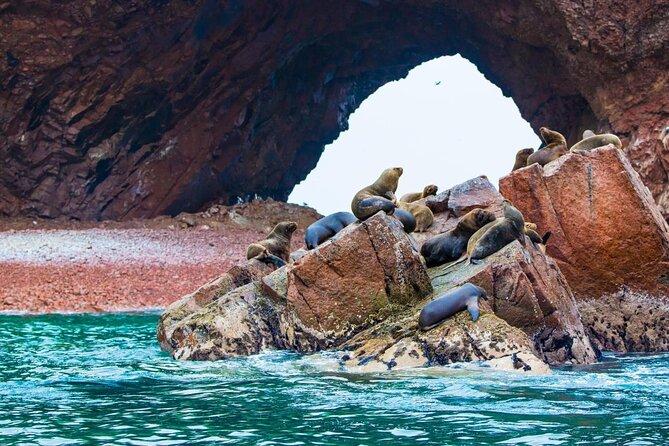 Ballestas-Inseln (Islas Ballestas)