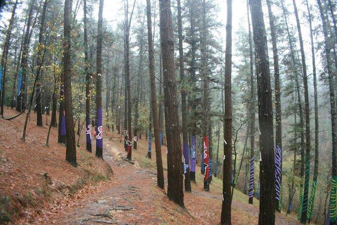 Oma Wald (Bosque de Oma)