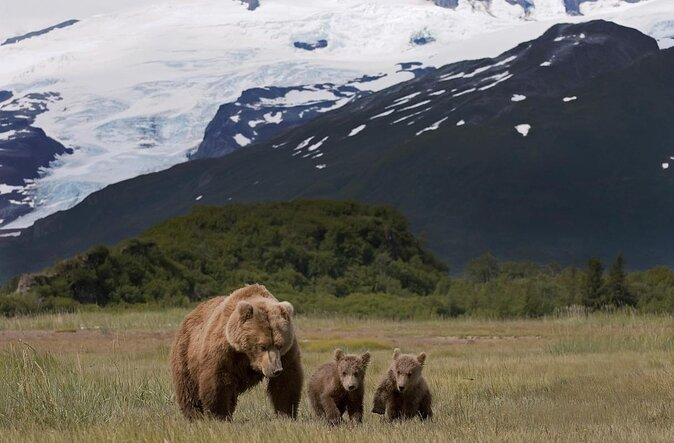 Parc national et réserve de Katmai