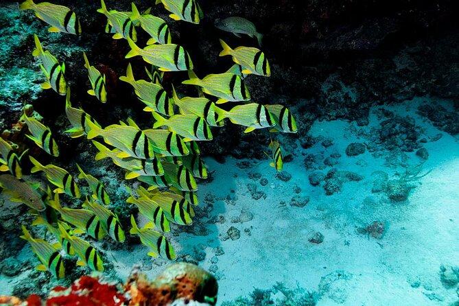 Cozumel Reefs National Marine Park