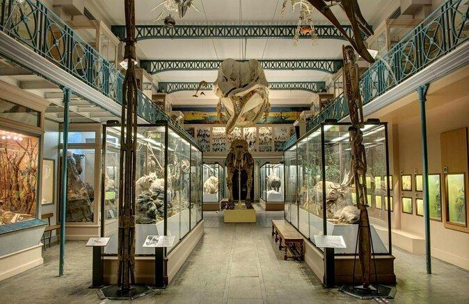 Lille Natural History Museum (Musée d'Histoire Naturelle de Lille)