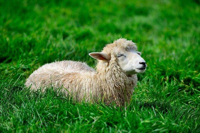 Granja de ovejas Daegwallyeong