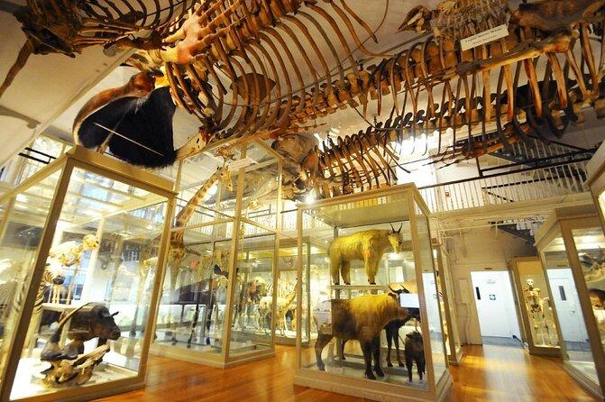 Museo di Storia Naturale di Harvard