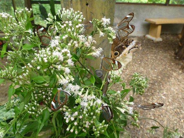 Green Hills Butterfly Ranch