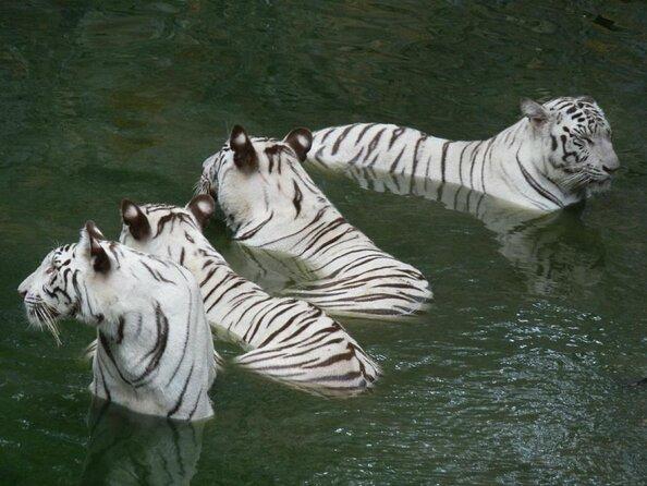 Arignar Anna Zoological Park (Vandalur Zoo)