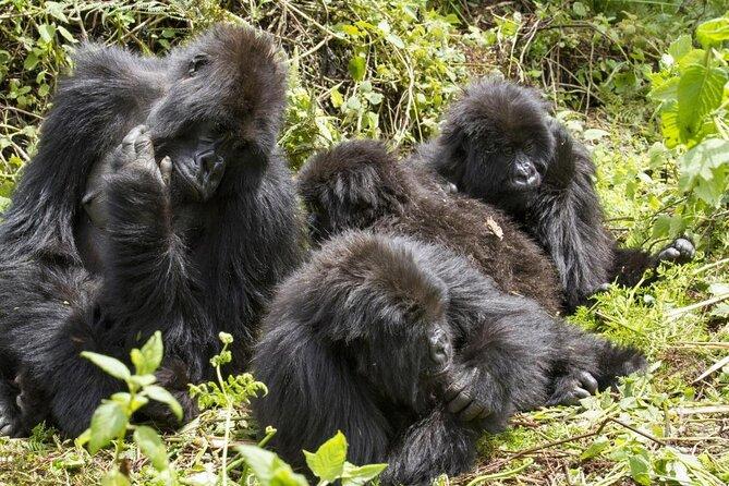 Parc national impénétrable de Bwindi