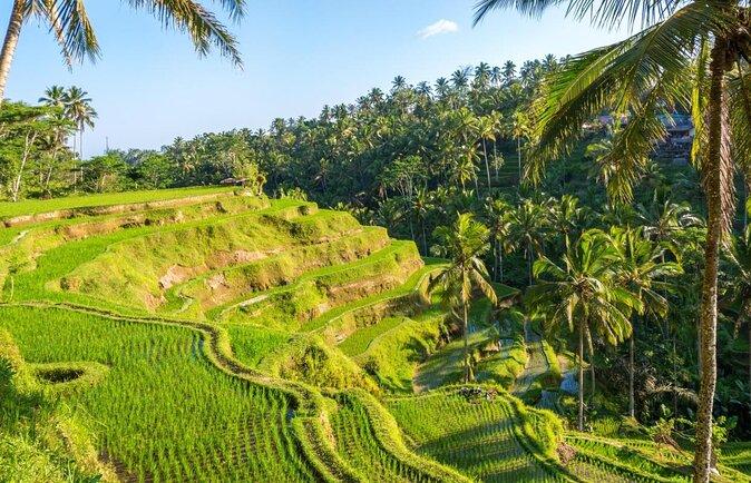 Tegalalang Rice Terrace (Sawah Terasering Tegalalang)
