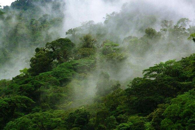 Children's Eternal Rainforest (Bosque Eterno de los Niños)