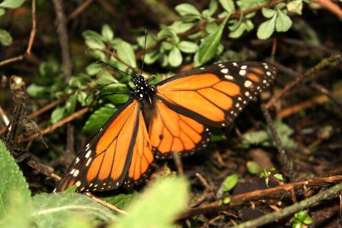 Piedra Herrada (santuário da borboleta monarca)