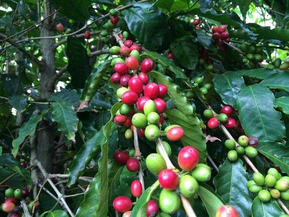 Kaʻu Coffee Mill