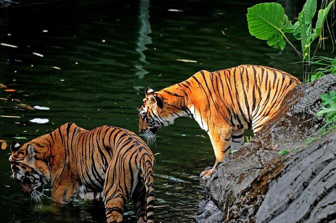 Taman Safari Bogor (Bogor Safari Park)