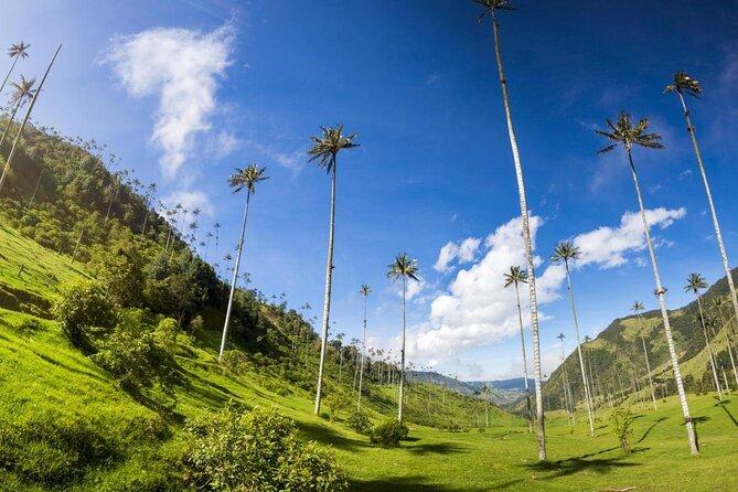Cocora Valley (Valle de Cocora)