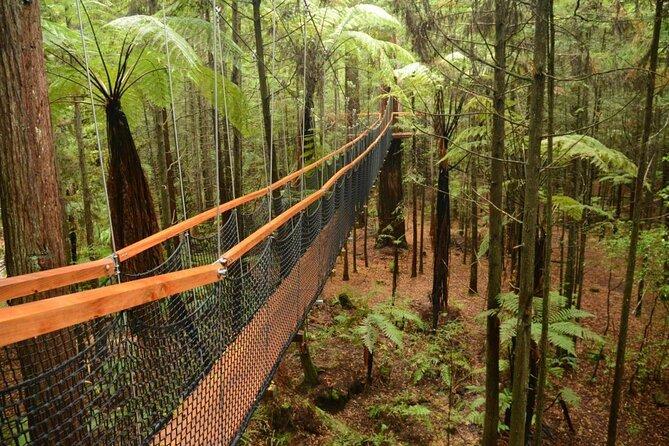 Redwoods Forest Whakarewarewa