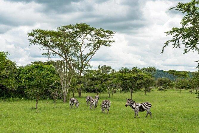 Parco Nazionale del Lago Mburo