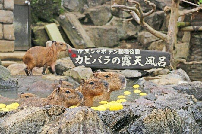Zoo di Izu Shaboten