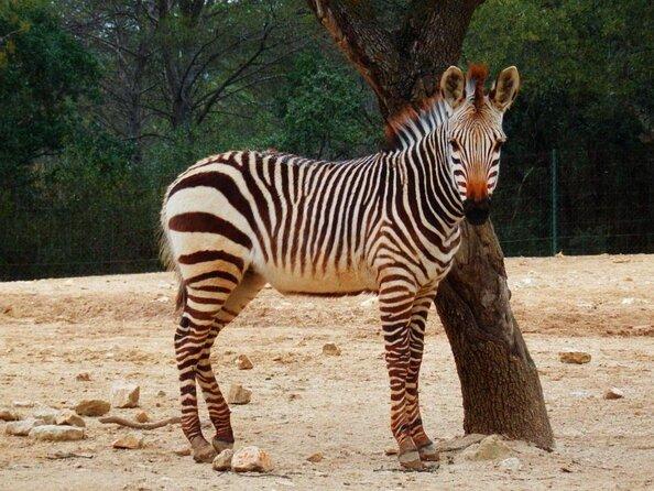 Montpellier Zoo (Zoo de Montpellier)