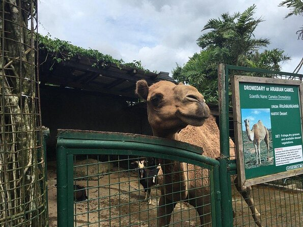 ZOORI (Zoo at Residence Inn)