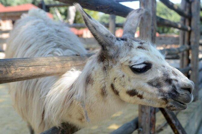 Varna Zoo (Zoopark)
