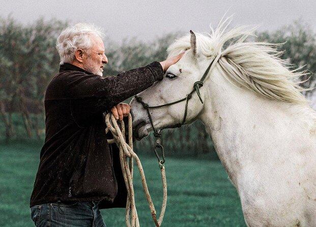Brunir Horse