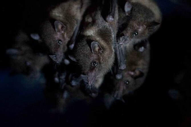 The Bat Jungle