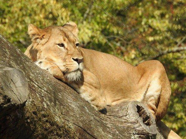 Attilly Wood Zoo (Zoo du Bois d'Attilly)