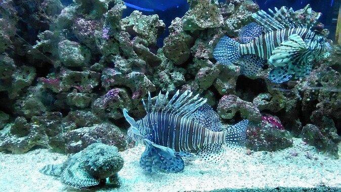 Acqua Mundo Aquarium
