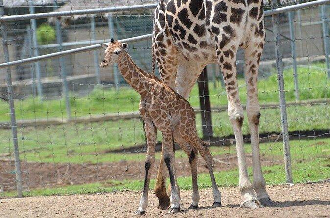 A' Famosa Safari Wonderland