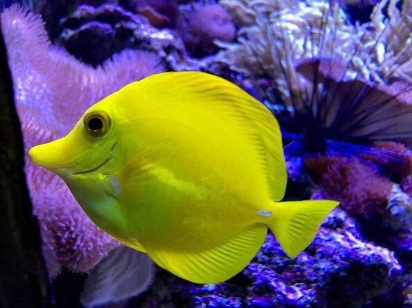 Amneville Aquarium (Aquarium d'Amneville)