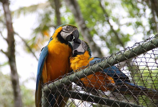Brusque Zoo Botanical Park (Parque Zoobotanico de Brusque)