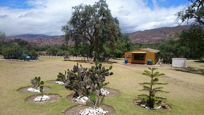 Ostrich Farm (Granja de Avestruces)