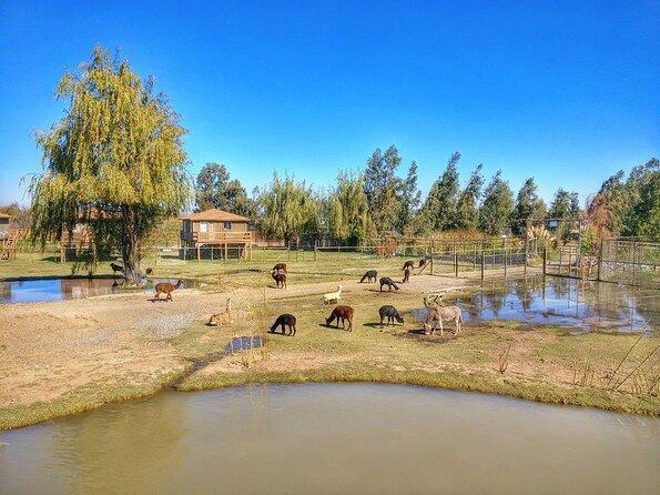 Chile Safari Park (Parque Safari Chile)