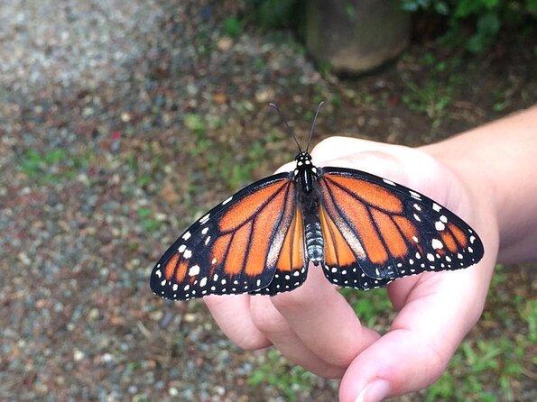 Aguias da Serra Butterfly Center (Borboletario Aguias da Serra)